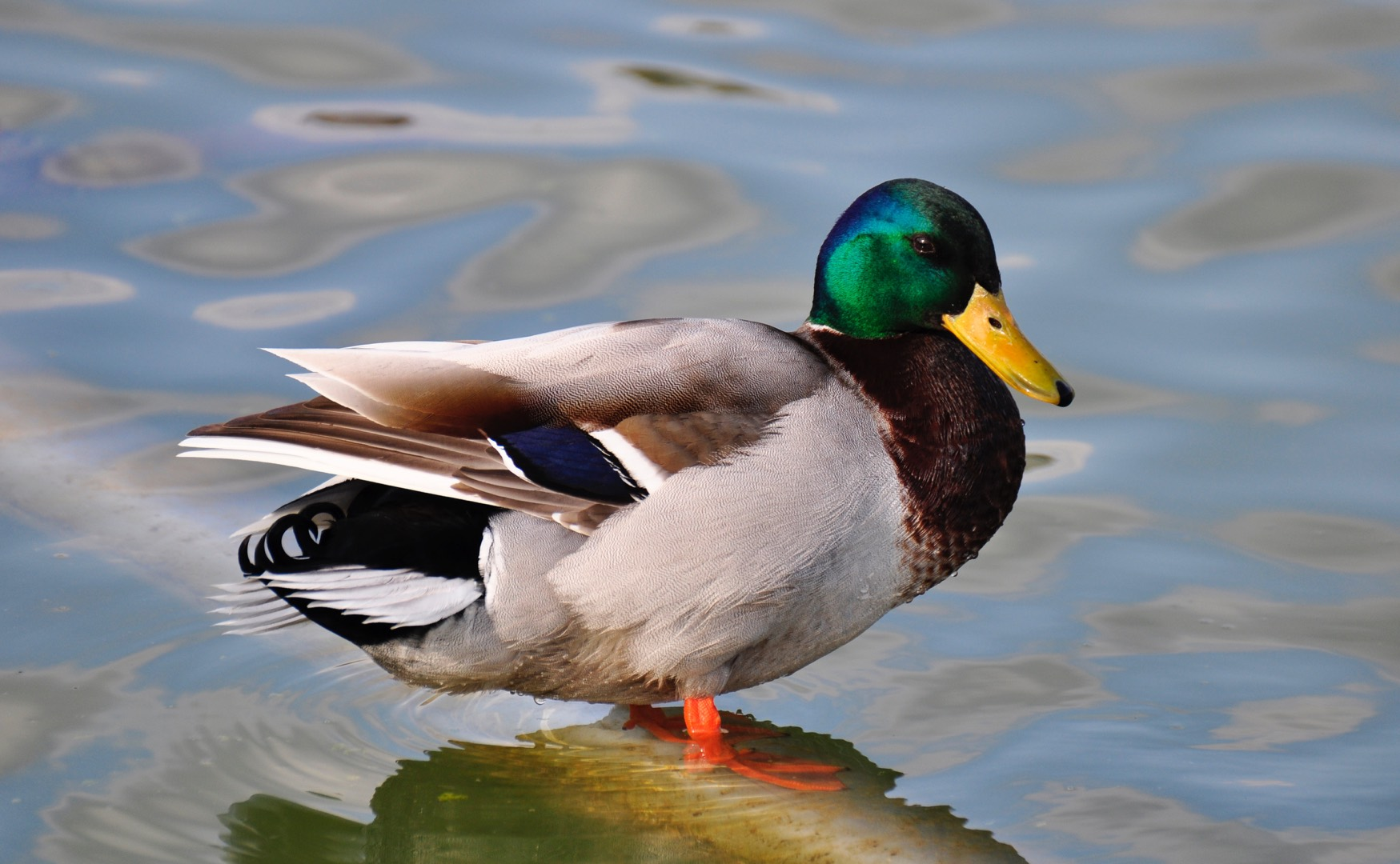 Lessons From The Duck Pond About Trust And Loyalty